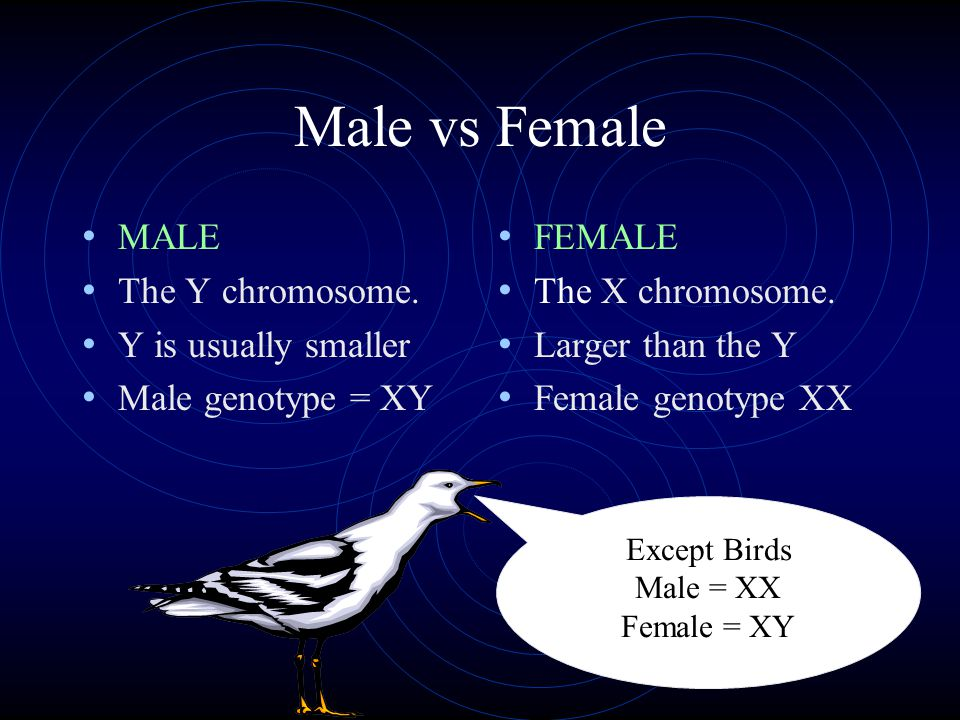 Male vs Female MALE The Y chromosome.