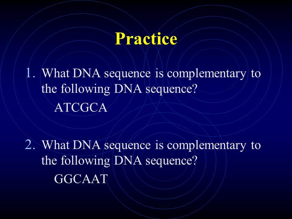 3.DNA then seals back together (H bonds form).
