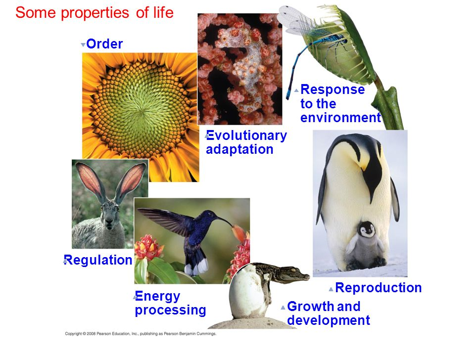 Order Evolutionary adaptation Response to the environment Reproduction Growth and development Energy processing Regulation Some properties of life