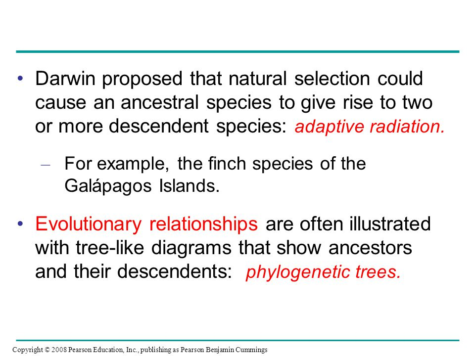 Darwin proposed that natural selection could cause an ancestral species to give rise to two or more descendent species: adaptive radiation. – For exam