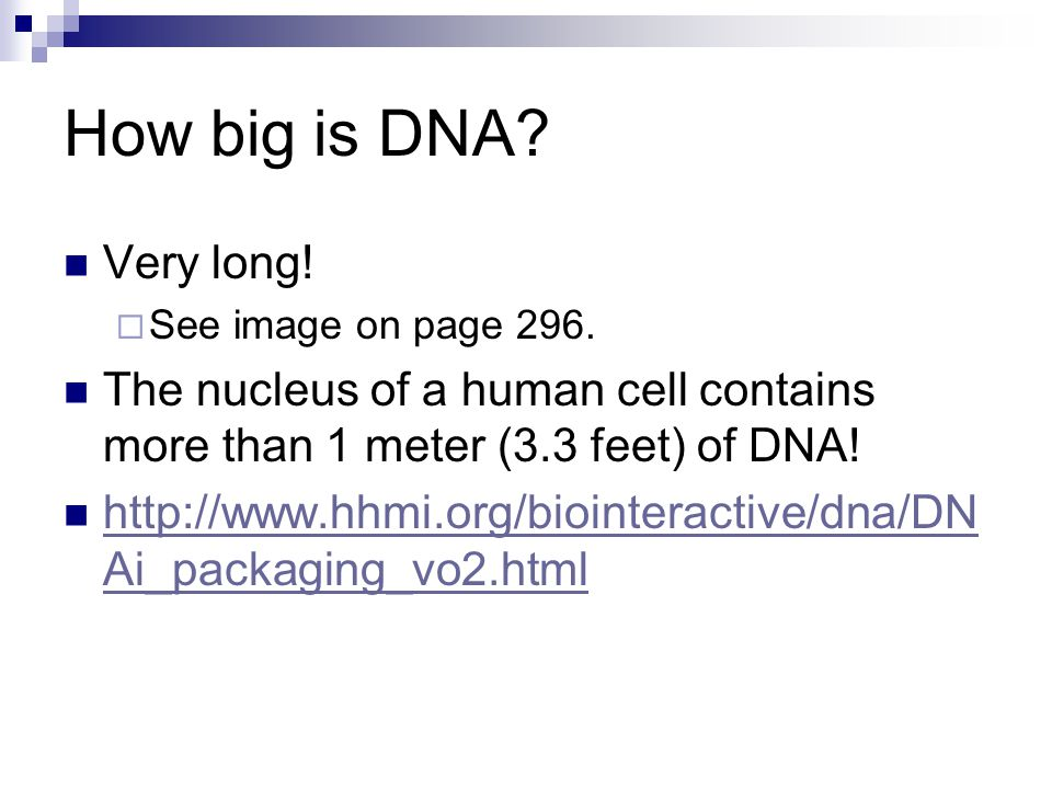 How big is DNA. Very long.  See image on page 296.