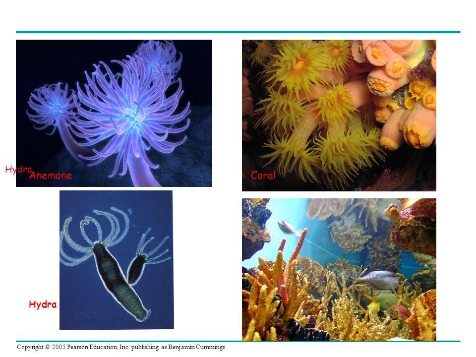 Copyright © 2005 Pearson Education, Inc. publishing as Benjamin Cummings CoralAnemone Hydra