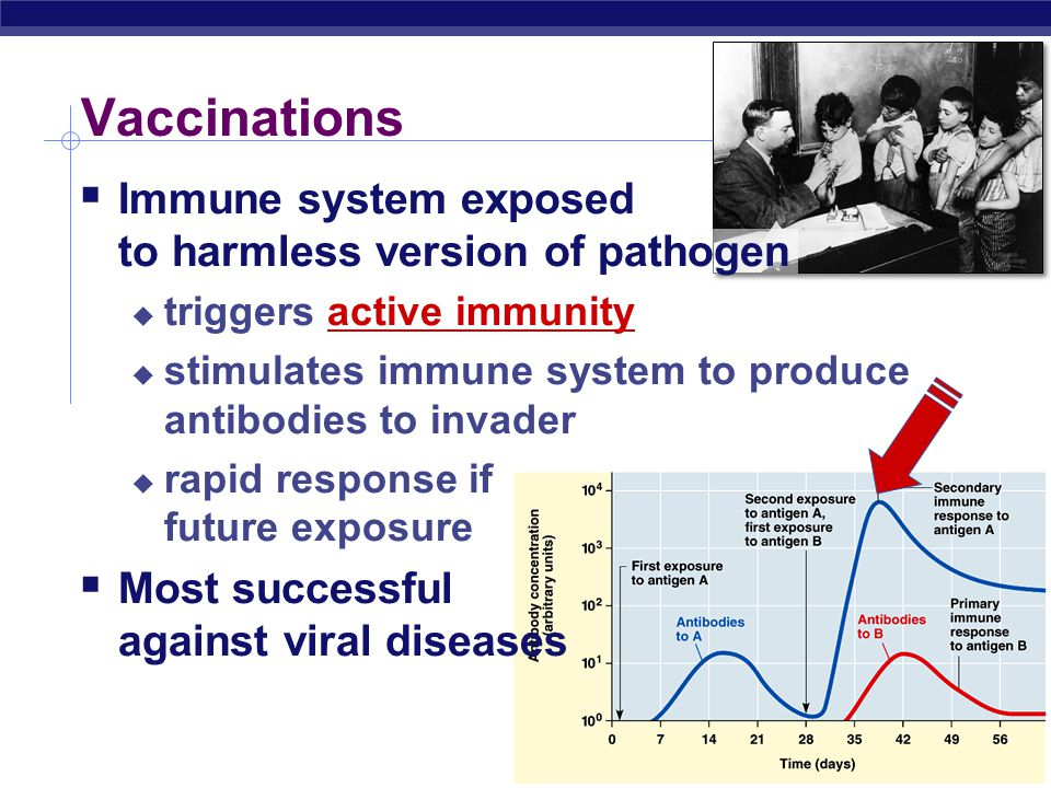 Vaccinations  Immune system exposed to harmless version of pathogen  triggers active immunity  stimulates immune system to produce antibodies to invader  rapid response if future exposure  Most successful against viral diseases