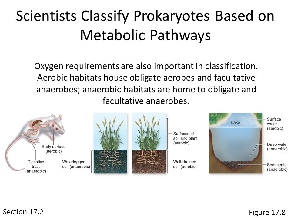 Scientists Classify Prokaryotes Based on Metabolic Pathways Section 15.1 Oxygen requirements are also important in classification.