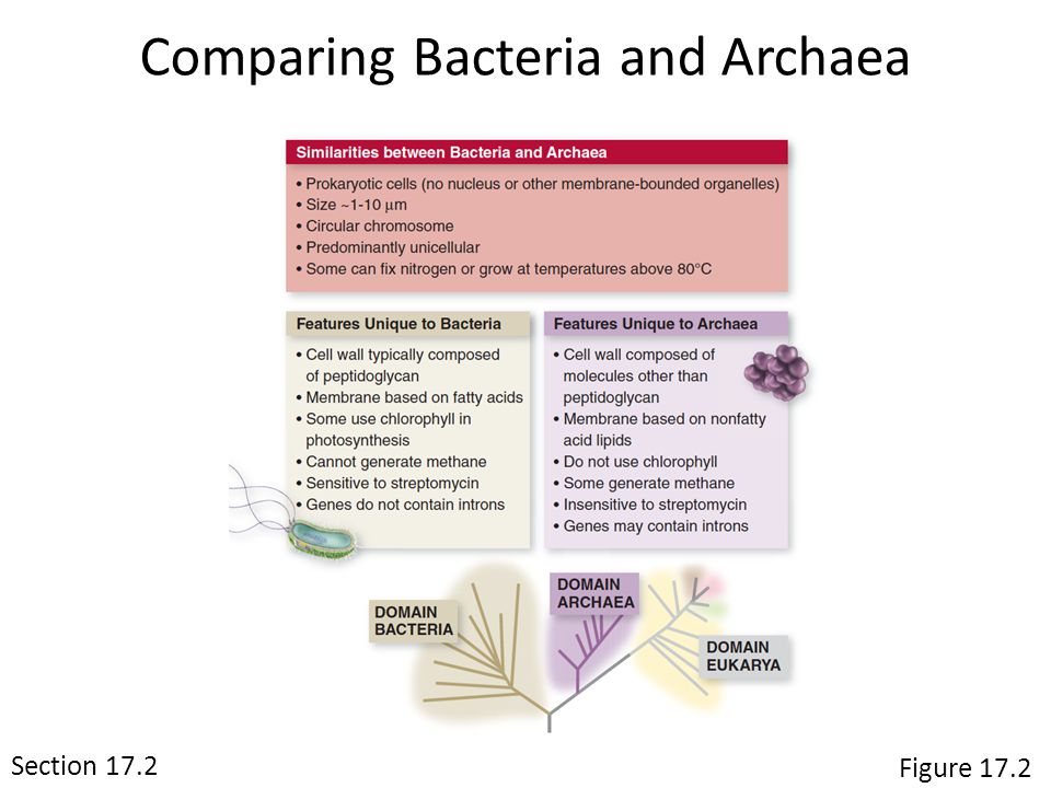 Comparing Bacteria and Archaea Section 15.1 Figure 17.2 Section 17.2