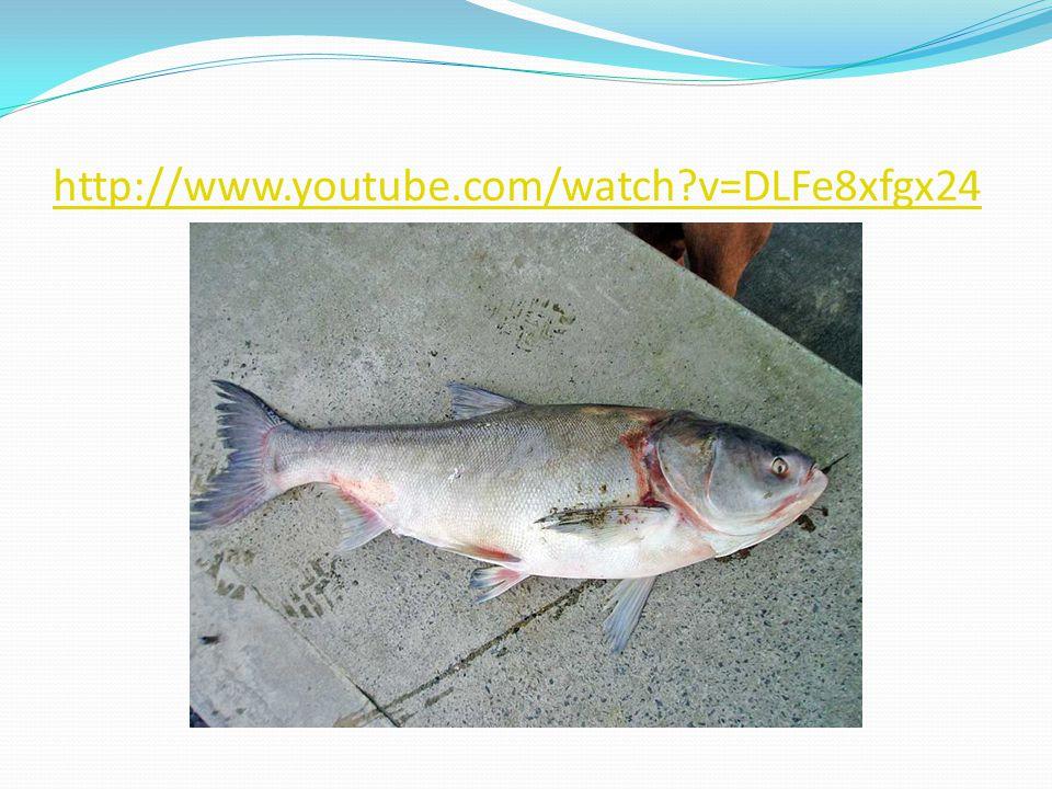 http://www.youtube.com/watch v=DLFe8xfgx24