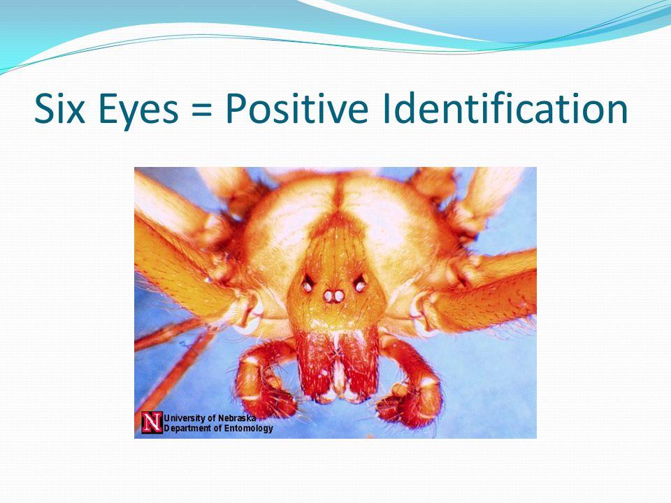 Six Eyes = Positive Identification