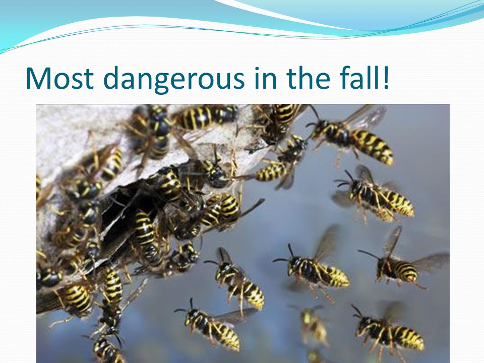 Most dangerous in the fall!