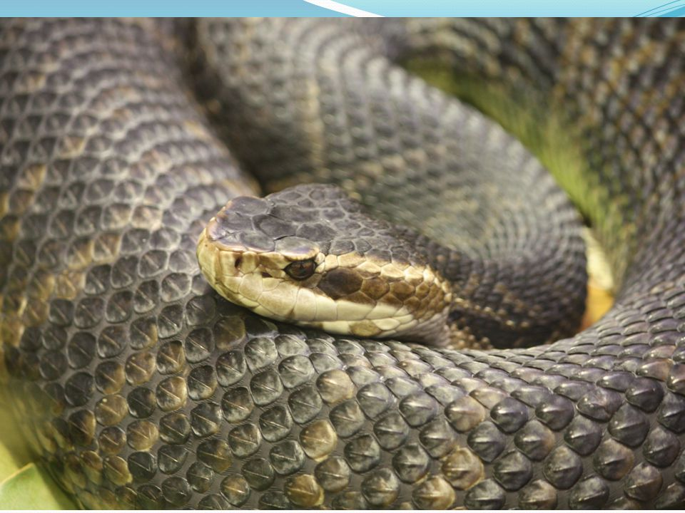 Is this animal really venomous?