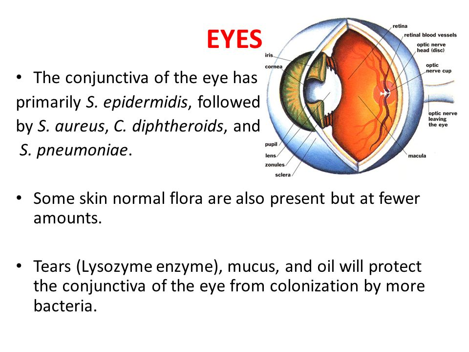 Normal Flora in the Eye