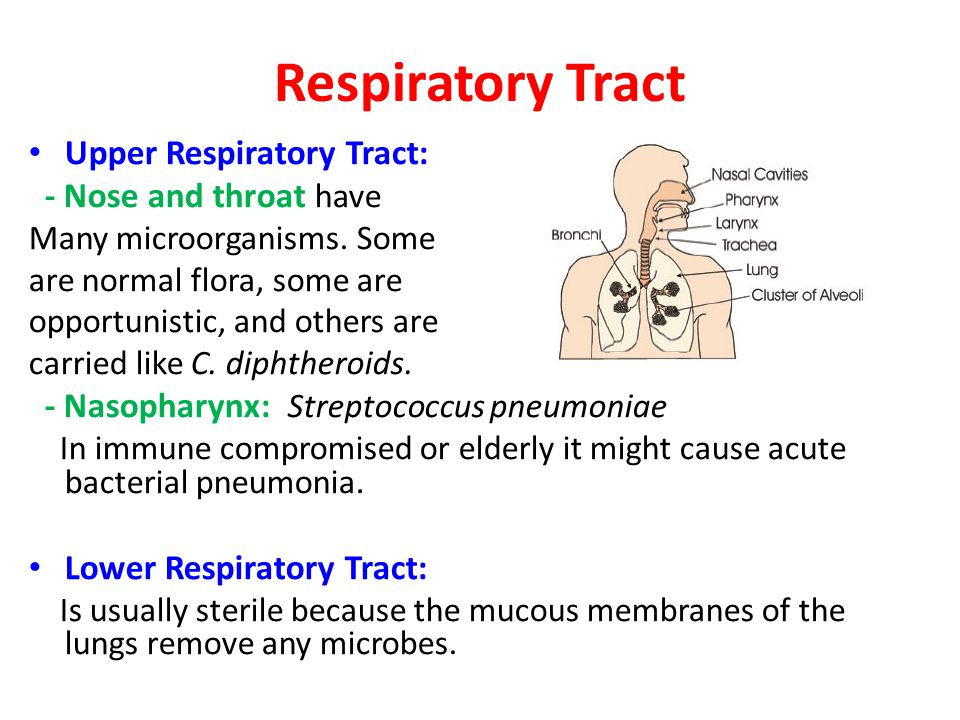 Oral Cavity (Mouth) They have both aerobic and anaerobic bacteria.