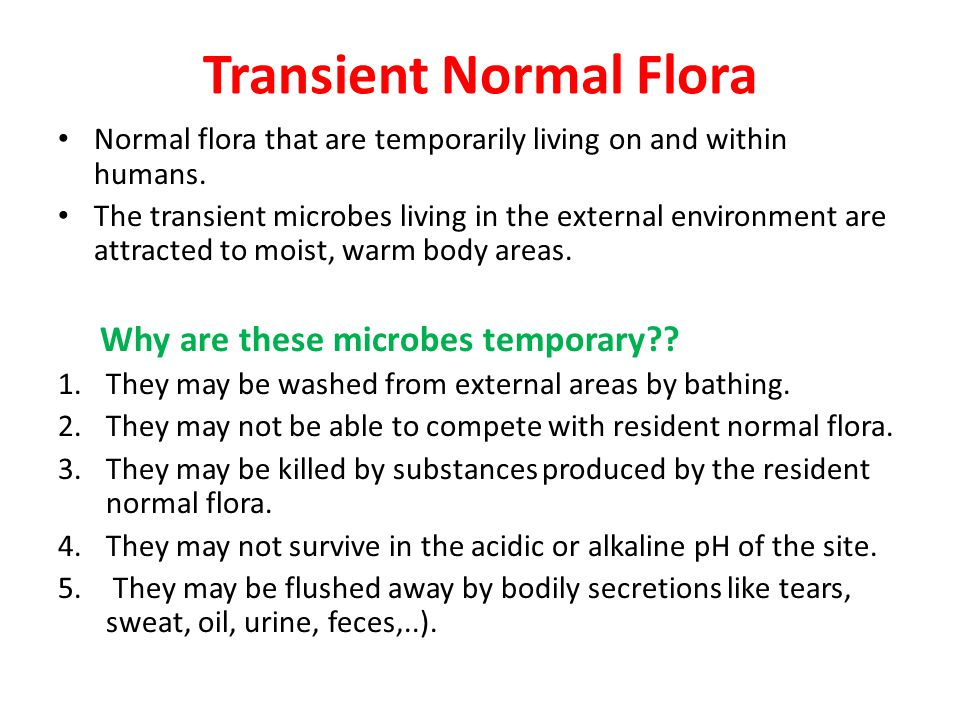 Where Can We find Normal Flora.