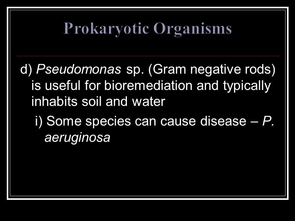 d) Pseudomonas sp.