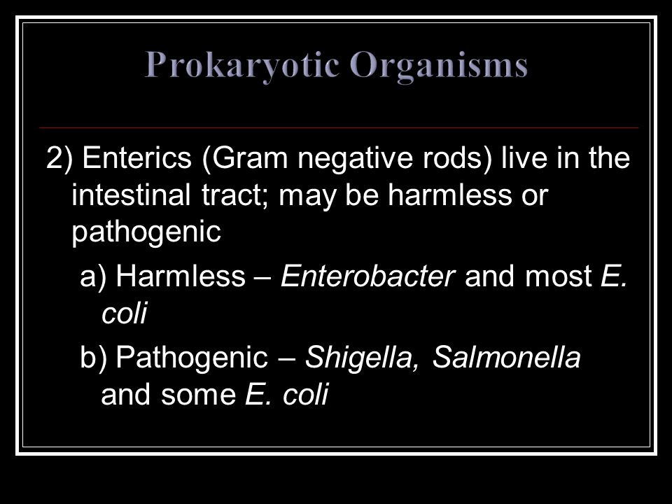2) Enterics (Gram negative rods) live in the intestinal tract; may be harmless or pathogenic a) Harmless – Enterobacter and most E. coli b) Pathogenic