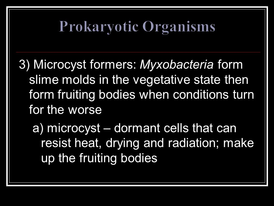 3) Microcyst formers: Myxobacteria form slime molds in the vegetative state then form fruiting bodies when conditions turn for the worse a) microcyst