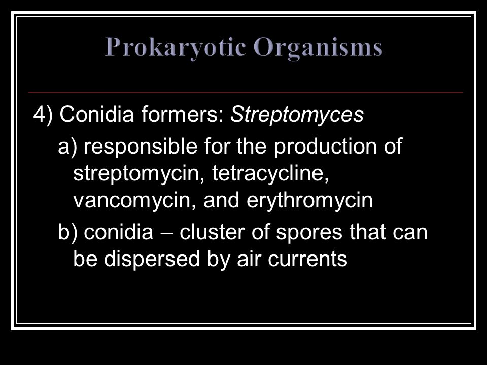 4) Conidia formers: Streptomyces a) responsible for the production of streptomycin, tetracycline, vancomycin, and erythromycin b) conidia – cluster of spores that can be dispersed by air currents