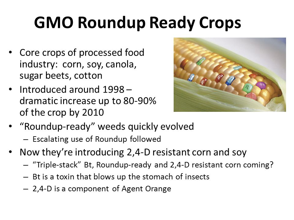 GMO Roundup Ready Crops Core crops of processed food industry: corn, soy, canola, alfalfa, sugar beets, cotton Introduced around 1998 – dramatic incre