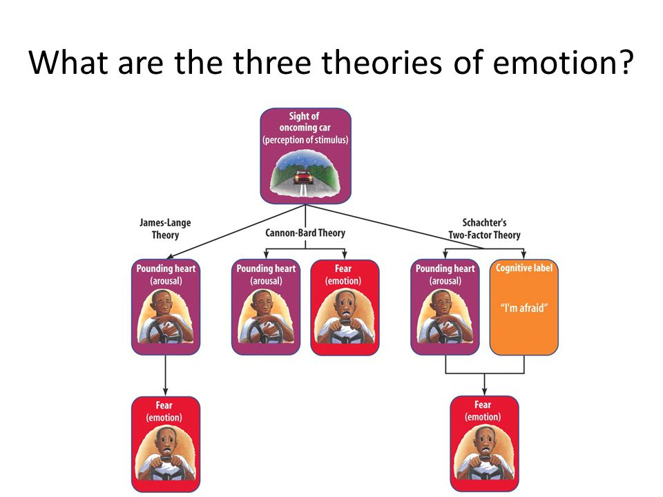 What are the three theories of emotion?