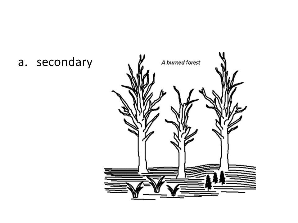a. secondary