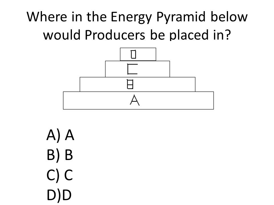 Where in the Energy Pyramid below would Producers be placed in A) A B) B C) C D)D