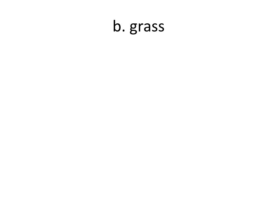 b. grass