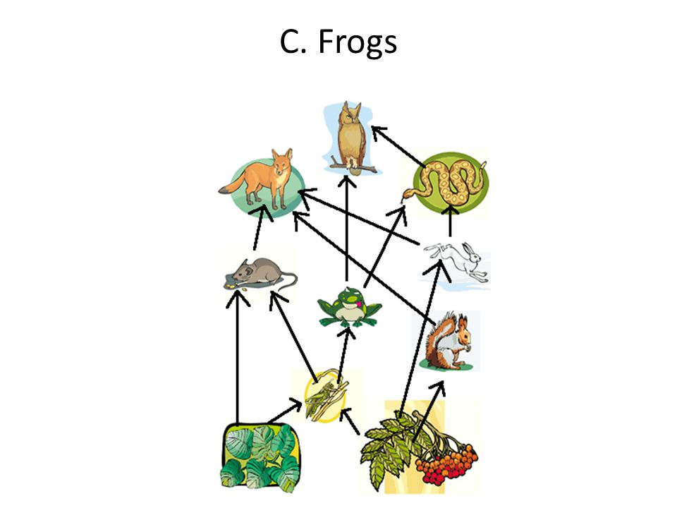 C. Frogs