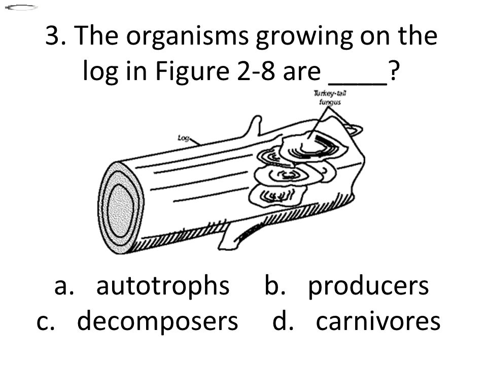 3. The organisms growing on the log in Figure 2-8 are ____.