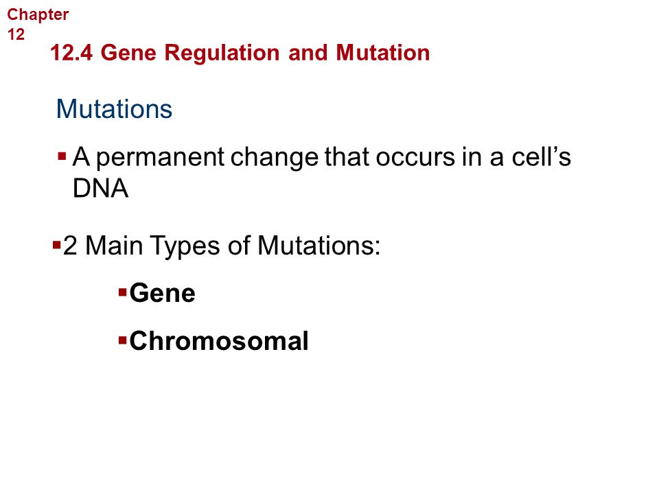 Molecular Genetics Mutations  A permanent change that occurs in a cell's DNA 12.4 Gene Regulation and Mutation Chapter 12  2 Main Types of Mutations
