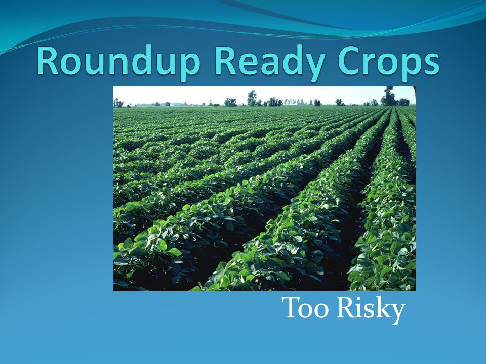 What are Roundup Ready Crops.