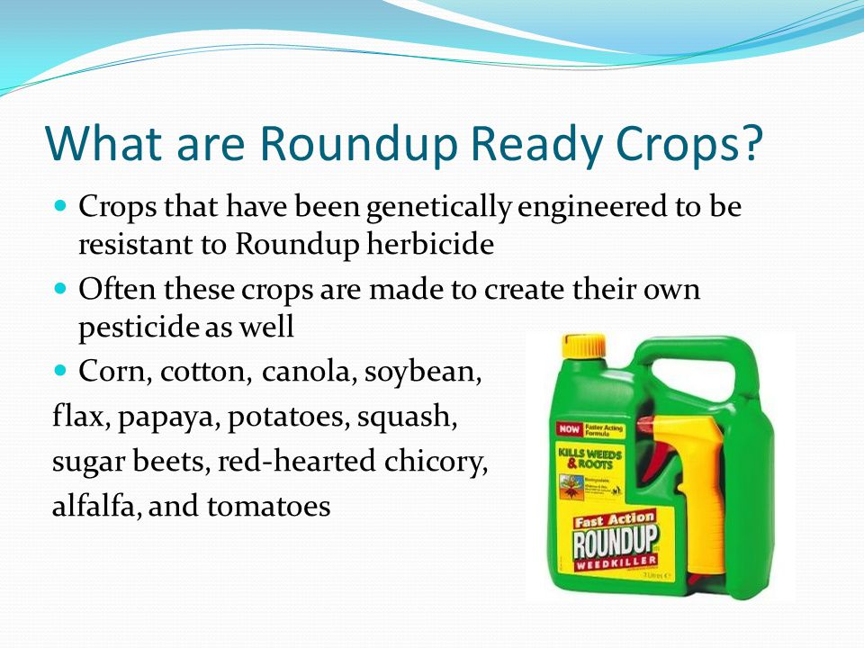 What are Roundup Ready Crops? Crops that have been genetically engineered to be resistant to Roundup herbicide Often these crops are made to create th