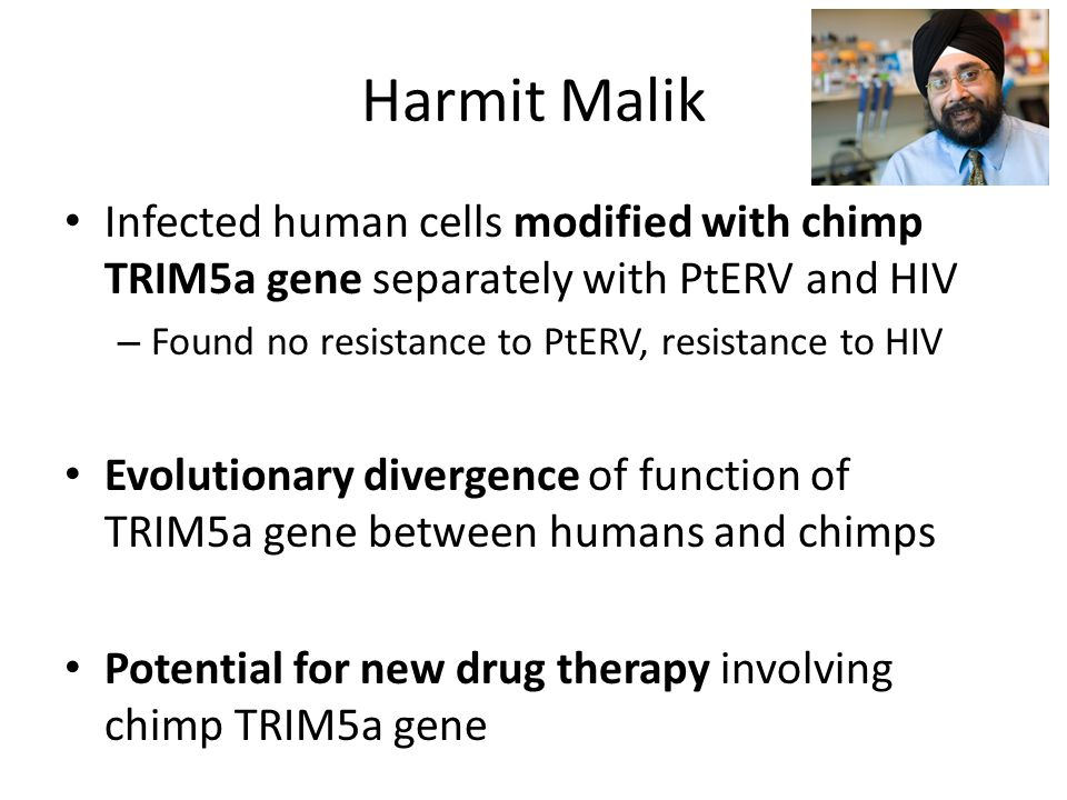 Harmit Malik Infected human cells modified with chimp TRIM5a gene separately with PtERV and HIV – Found no resistance to PtERV, resistance to HIV Evolutionary divergence of function of TRIM5a gene between humans and chimps Potential for new drug therapy involving chimp TRIM5a gene