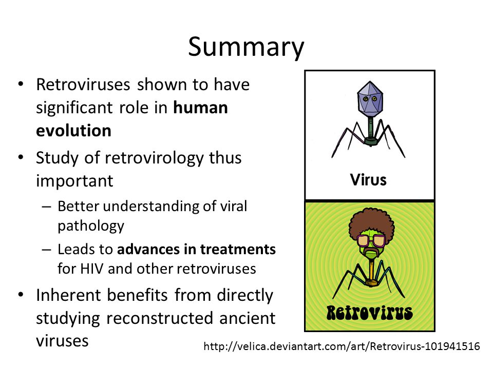 Summary Retroviruses shown to have significant role in human evolution Study of retrovirology thus important – Better understanding of viral pathology – Leads to advances in treatments for HIV and other retroviruses Inherent benefits from directly studying reconstructed ancient viruses http://velica.deviantart.com/art/Retrovirus-101941516