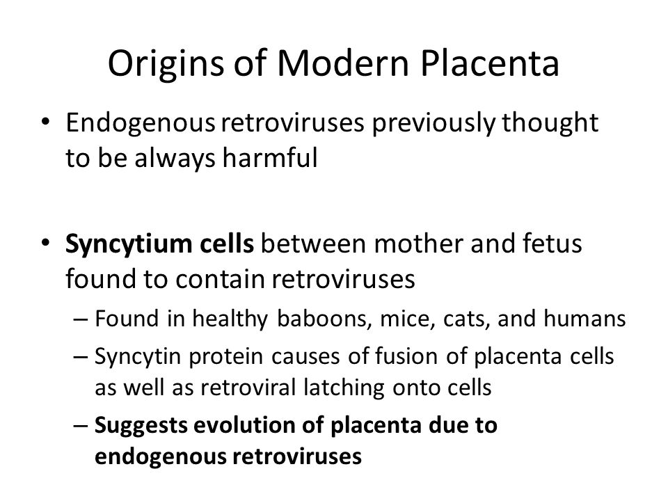 Origins of Modern Placenta Endogenous retroviruses previously thought to be always harmful Syncytium cells between mother and fetus found to contain retroviruses – Found in healthy baboons, mice, cats, and humans – Syncytin protein causes of fusion of placenta cells as well as retroviral latching onto cells – Suggests evolution of placenta due to endogenous retroviruses