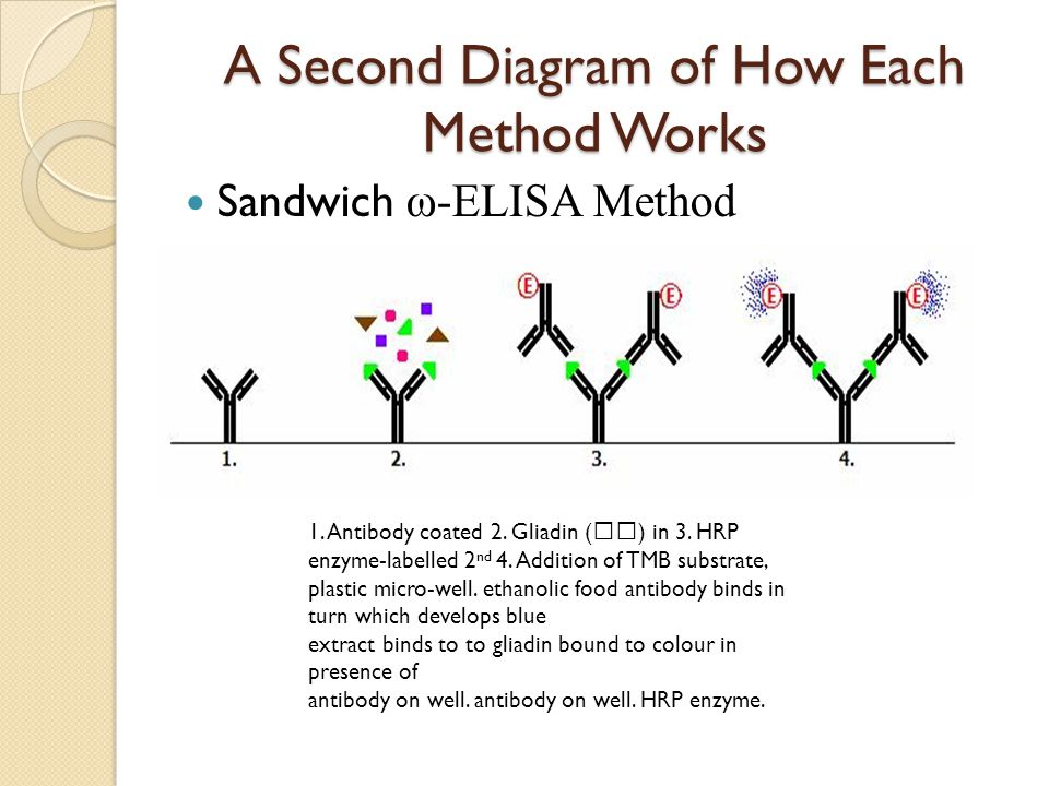 A Second Diagram of How Each Method Works Sandwich ω-ELISA Method 1. Antibody coated 2. Gliadin () in 3. HRP enzyme-labelled 2 nd 4. Addition of TMB s