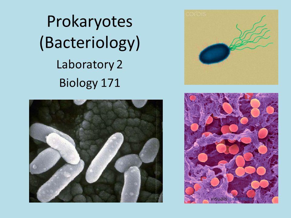 Prokaryotes (Bacteriology) Laboratory 2 Biology 171