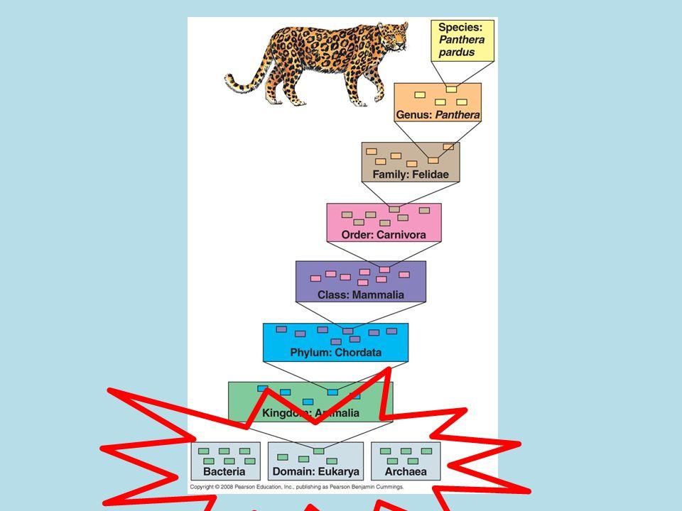 Three domains of life: two are prokaryotic