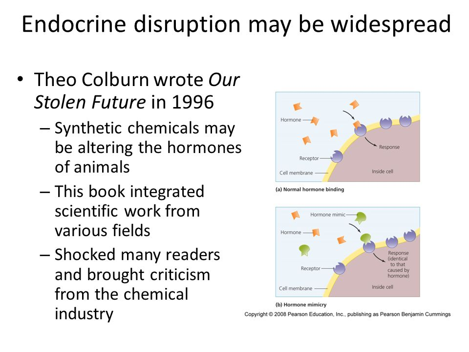 Endocrine disruption may be widespread Theo Colburn wrote Our Stolen Future in 1996 – Synthetic chemicals may be altering the hormones of animals – Th