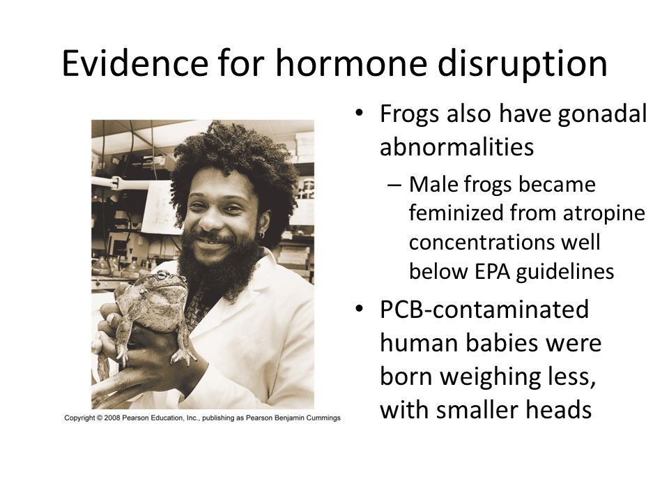 Evidence for hormone disruption Frogs also have gonadal abnormalities – Male frogs became feminized from atropine concentrations well below EPA guidel