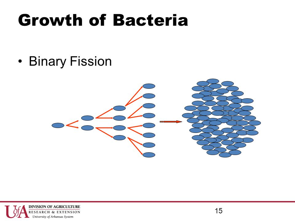 Growth of Bacteria Binary Fission 15