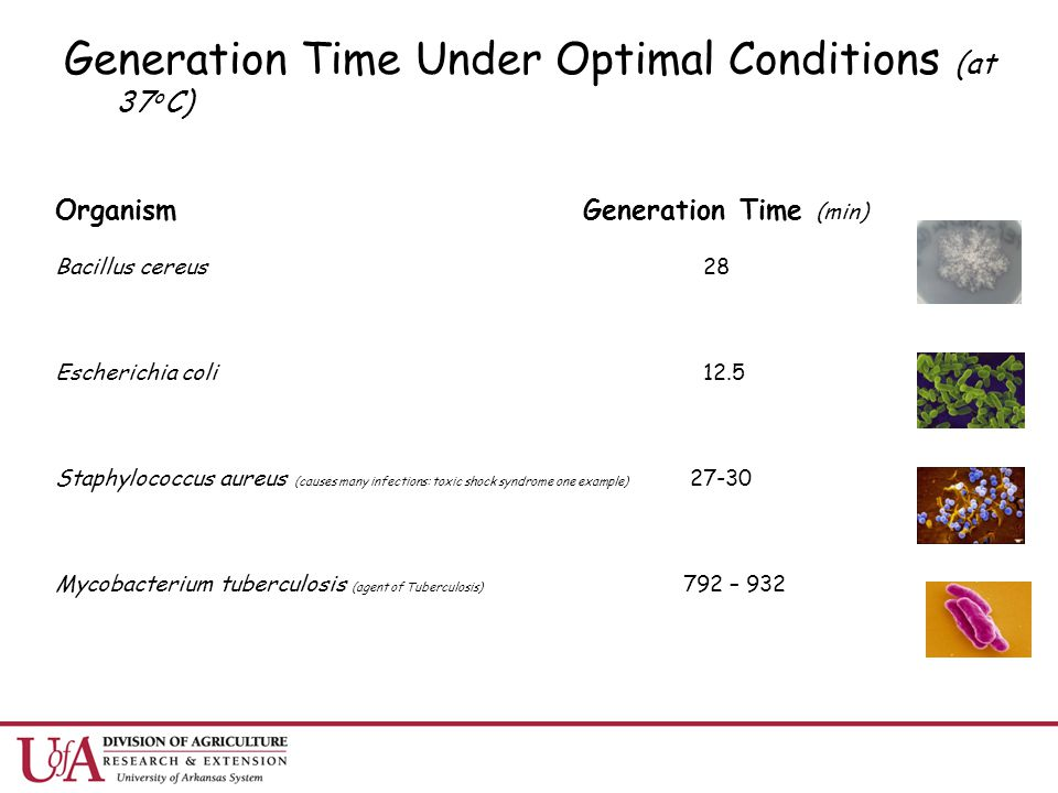 Generation Time Under Optimal Conditions (at 37 o C) Organism Generation Time (min) Bacillus cereus 28 Escherichia coli 12.5 Staphylococcus aureus (ca
