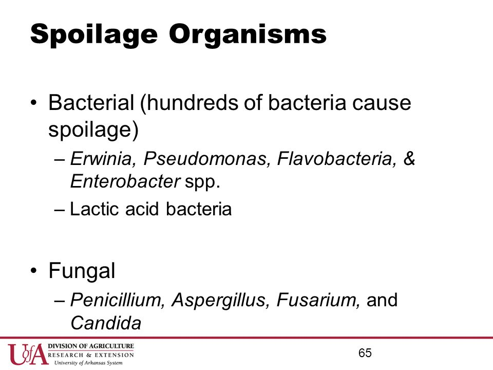 Spoilage Organisms Bacterial (hundreds of bacteria cause spoilage) –Erwinia, Pseudomonas, Flavobacteria, & Enterobacter spp. –Lactic acid bacteria Fun