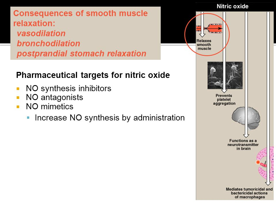 Consequences of smooth muscle relaxation: vasodilation bronchodilation postprandial stomach relaxation Pharmaceutical targets for nitric oxide  NO sy
