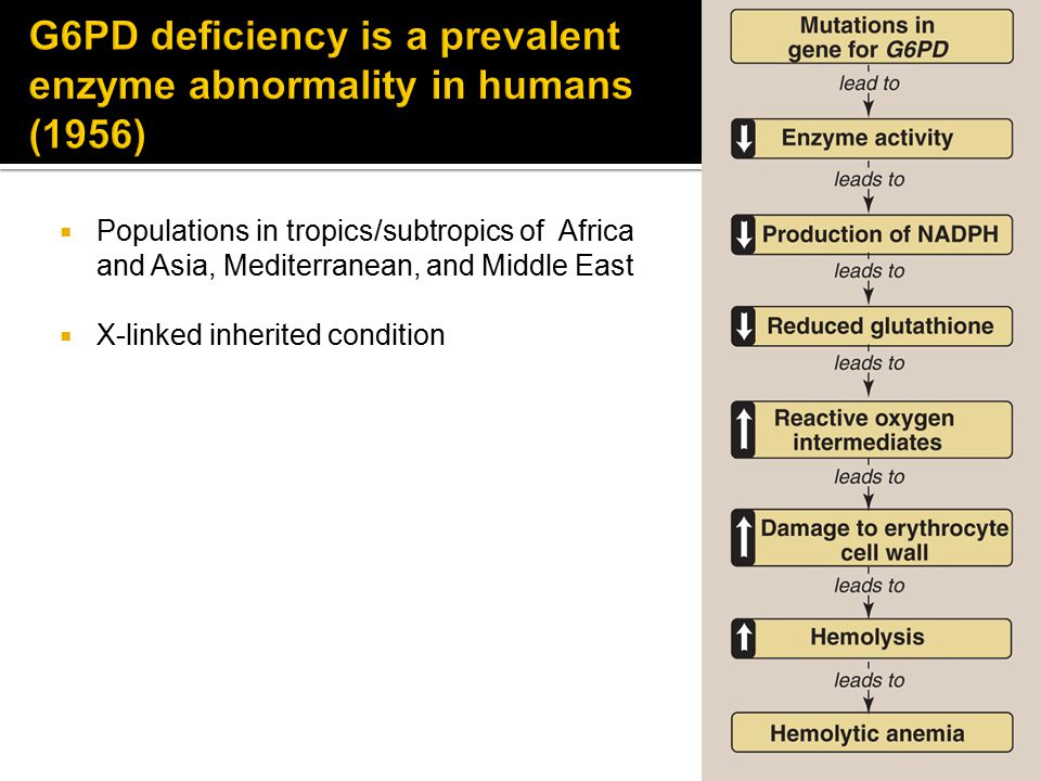  Populations in tropics/subtropics of Africa and Asia, Mediterranean, and Middle East  X-linked inherited condition