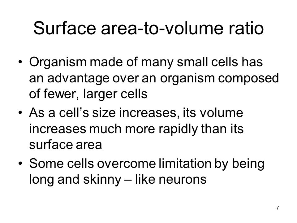 Surface area-to-volume ratio Organism made of many small cells has an advantage over an organism composed of fewer, larger cells As a cell's size increases, its volume increases much more rapidly than its surface area Some cells overcome limitation by being long and skinny – like neurons 7