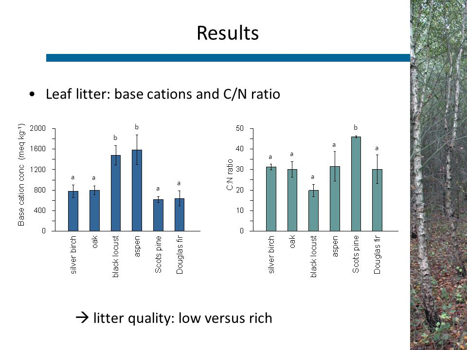 Leaf litter: base cations and C/N ratio  litter quality: low versus rich Results a a a a a b a a a a b b
