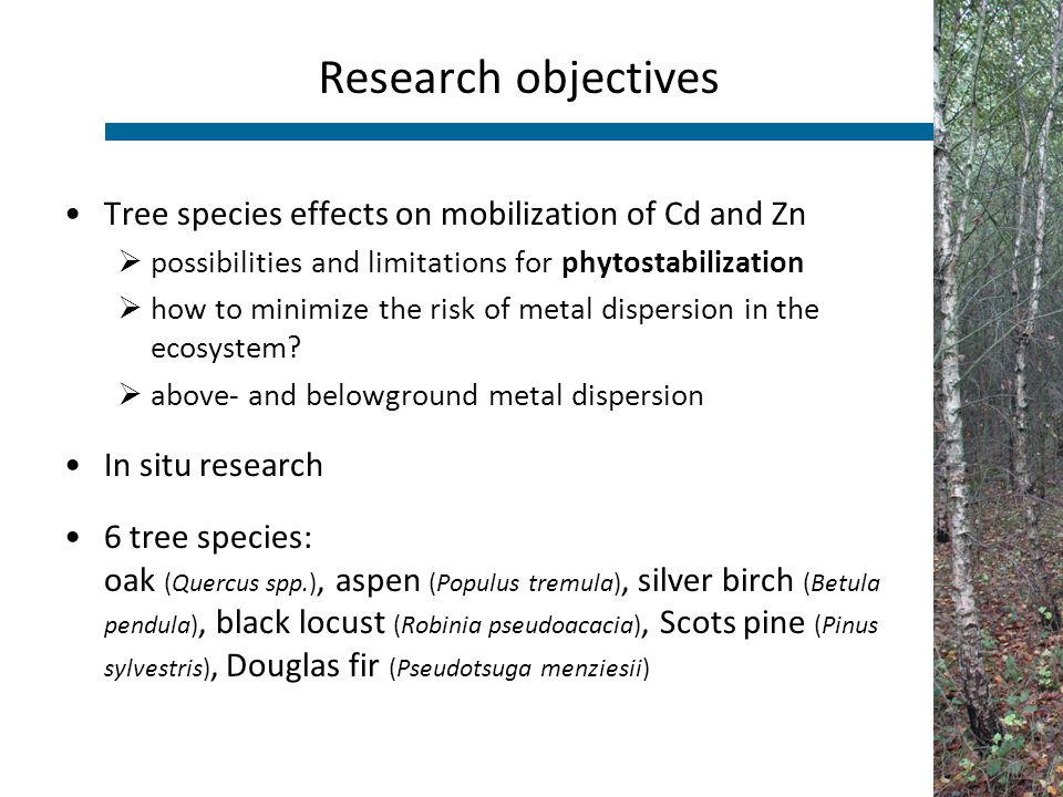 Tree species effects on mobilization of Cd and Zn  possibilities and limitations for phytostabilization  how to minimize the risk of metal dispersio