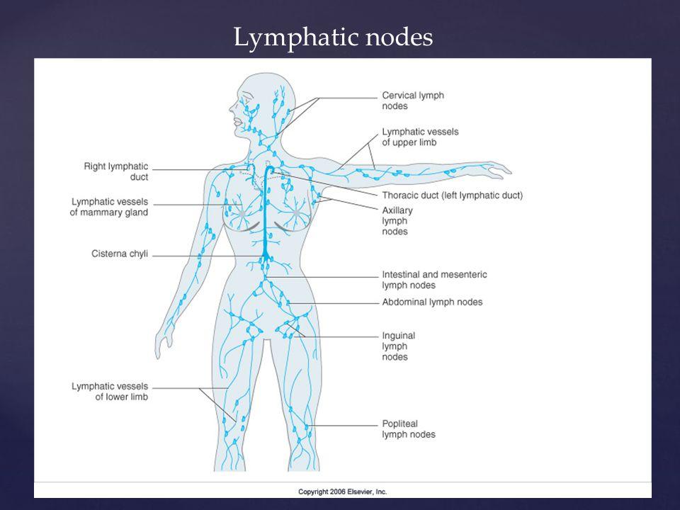Lymphatic nodes