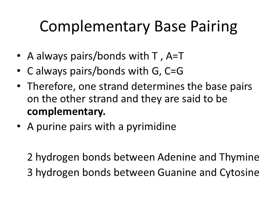 Complementary Base Pairing A always pairs/bonds with T, A=T C always pairs/bonds with G, C=G Therefore, one strand determines the base pairs on the other strand and they are said to be complementary.