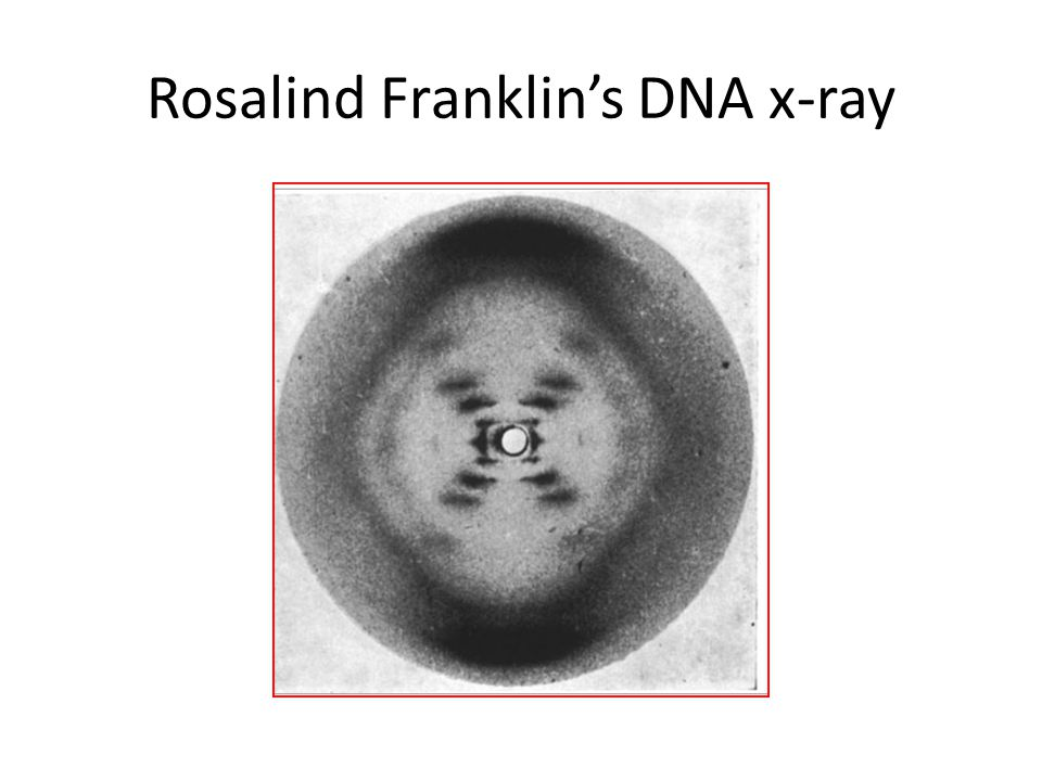 Rosalind Franklin's DNA x-ray