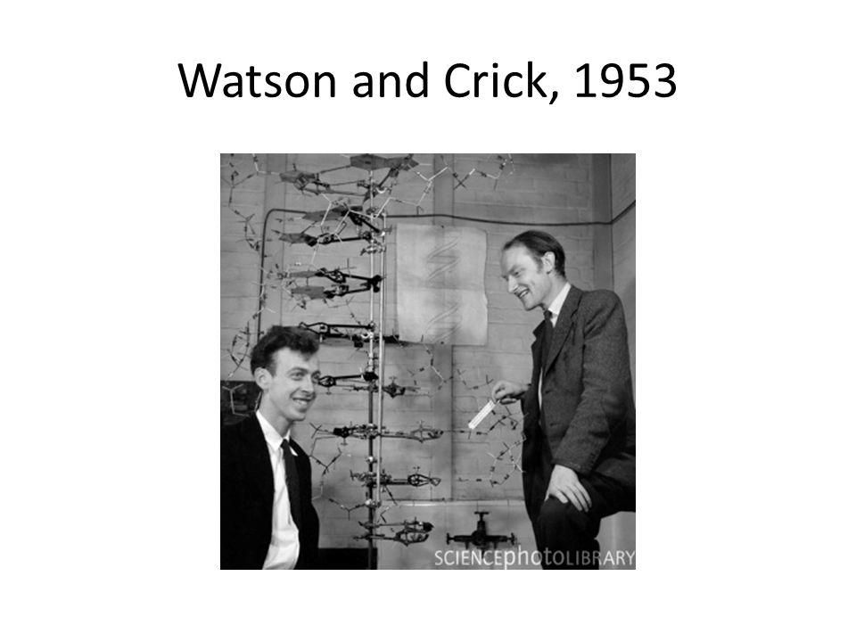 Watson and Crick, 1953